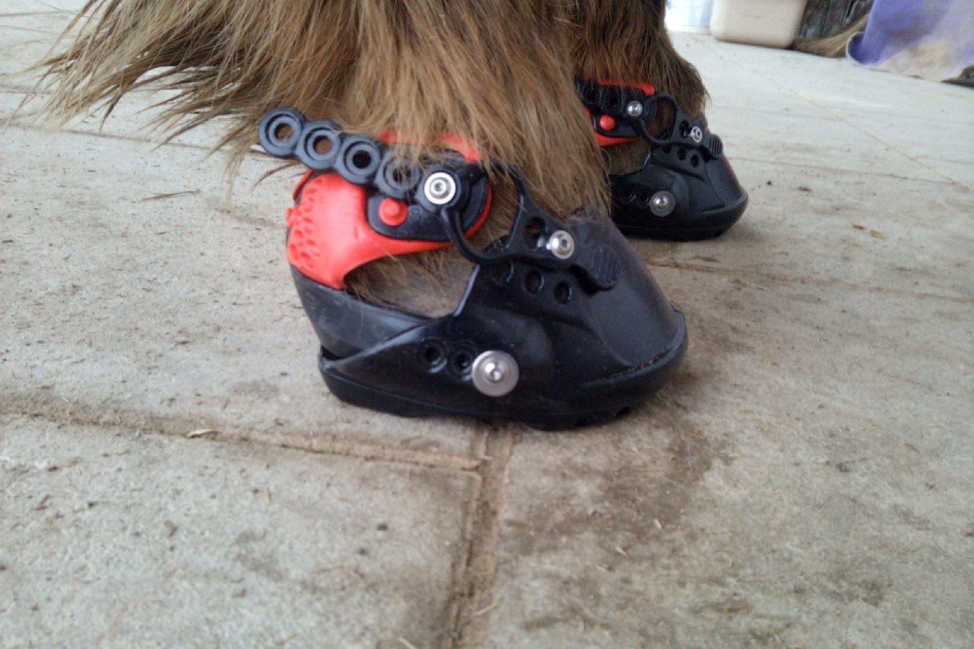 Evo Boot 1.19 Hufschuh-Test
